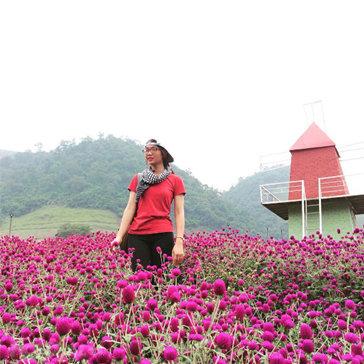 Tour Khám Phá Mộc Châu - Thiên Đường Happy Land 2N1Đ - Cho 01 Khách