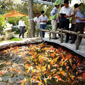 Du Lịch Vườn Sinh Thái Suối Cá Koi Nhật Bản Cho 2 Người Lớn & 2 Trẻ Em - Độc Nhất Tại Sài Gòn