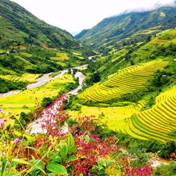 Tour Hà Nội - Sapa - Cát Cát - Hàm Rồng - Fansipan 3 Đêm 2 Ngày (Bus Nằm) - Cho 01 Người