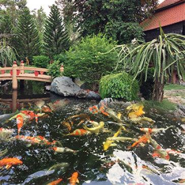 Vườn Sinh Thái Suối Cá Koi Nhật Bản - Gói Nghỉ Dưỡng 2N1Đ Gồm Ăn Sáng + Set Ăn Trưa/ Ăn Tối + Miễn Phí Nhiều Dịch Vụ Giải Trí