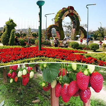 Tour Đà Lạt 4N3Đ – Vườn Hoa Thành Phố - Thác Đalanta – Nhà Thờ Domain – Buffet Rau Không Giới Hạn