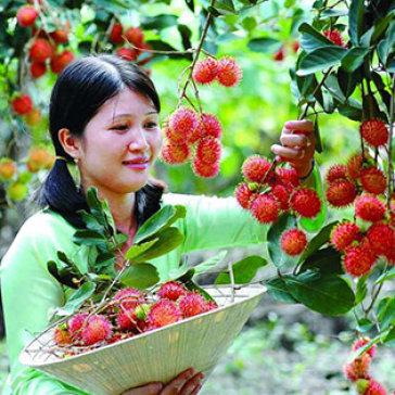 Tour Bến Tre 1 Ngày – Tham Quan Vườn Trái Cây Vào Các Mùa – Các Trò Chơi Dân Gian – Khởi Hành Thứ Bảy, Chủ Nhật Hàng Tuần