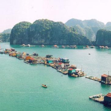 Tour HN - Cát Bà - Vịnh Lan Hạ - Đảo Khỉ 2N1Đ Cho 01 Người