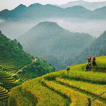 Tour Hà Giang 3N2Đ – Mùa Lúa Chín – Hoa Tam Giác Mạch -  Khám Phá Mèo Vạc – Lũng Cú - Đồng Văn - Khởi Hành Từ Hà Nội
