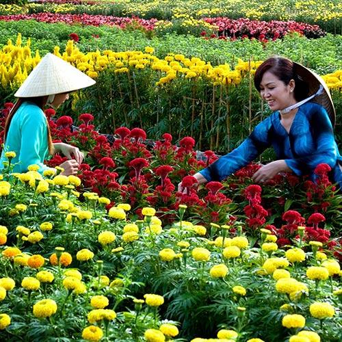 Tour Tết Đồng Tháp 01 Ngày – Khám Phá Làng Hoa Sa Đéc – Lễ Hội Hoa Xuân