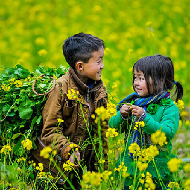 Tour Hà Giang 3N2Đ – Khám Phá Cao Nguyên Đá –  Cõi Tiên Du Già – Đèo Mã Lí Pèng Hùng Vĩ