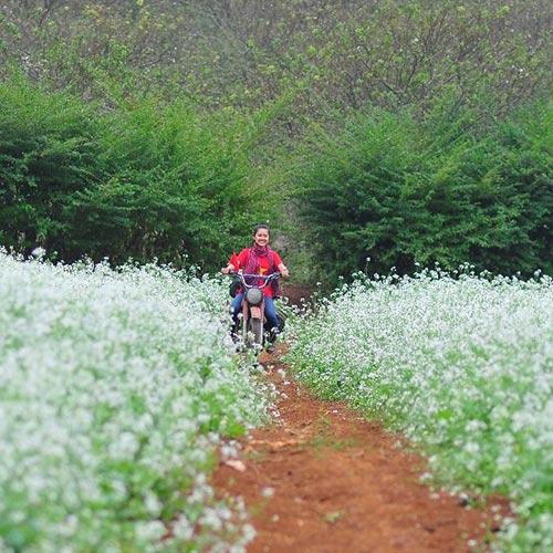 Tour Mai Châu – Mộc Châu 2N1Đ – Happy Land – Rừng Thông Bản Áng