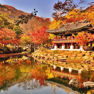 Tour Hàn Quốc Mùa Thu 4N4Đ Seoul – Everland – Đảo Nami