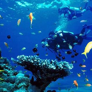 Tour Cano 1 Ngày Ngắm San Hô - Lặn Biển Tại Nha Trang – Khám Phá Vịnh San Hô - Làng Chài - Bãi Tranh. Không Phụ Thu Cuối Tuần