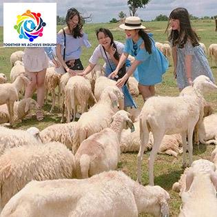 Tour Hodota Resort – Bình Châu – Vũng Tàu 2N1Đ Đốt Lửa Trại + Check In Đồi Cừu Châu Pha Suối Nghệ + Chơi Game Dưới Nước