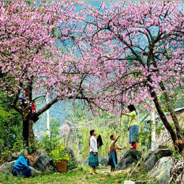 Tour Mai Châu Mộc Châu 2 Ngày 1 Đêm Dành Cho 1 Khách